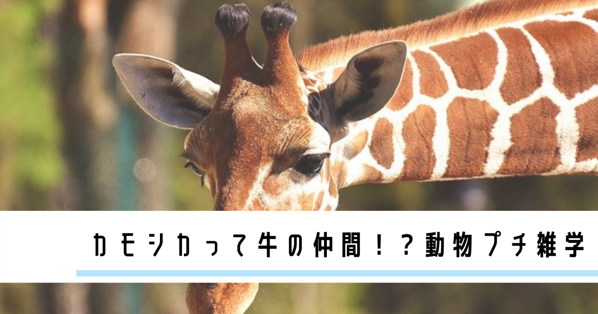 動物,おもしろ,雑学
