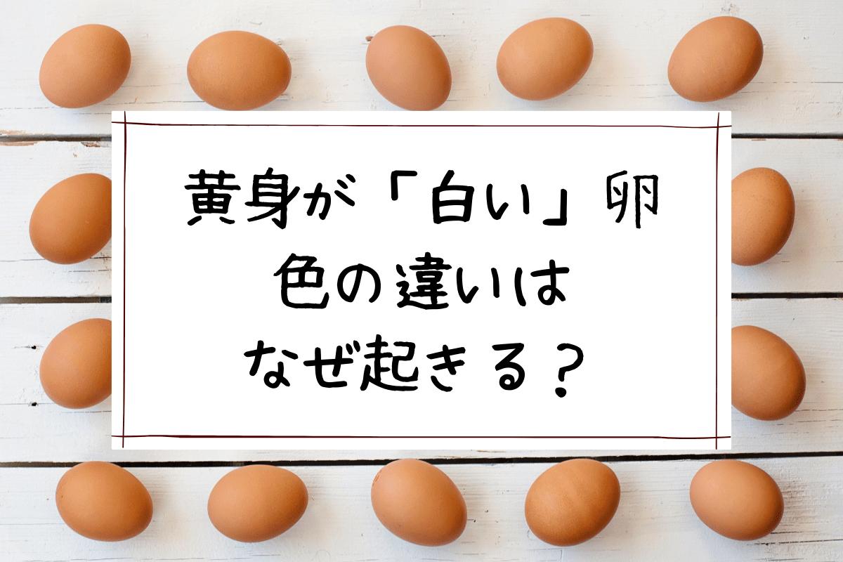 黄身が白い卵