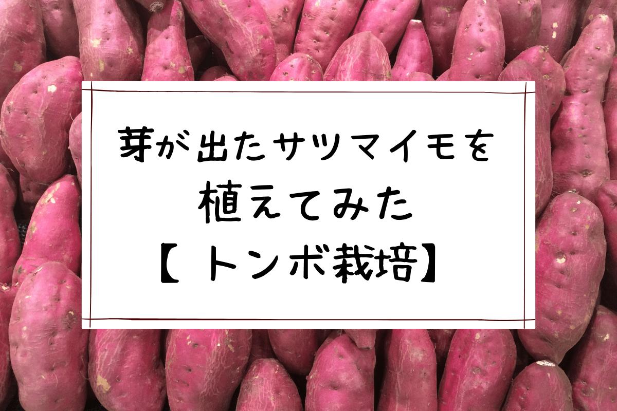 芽が出たサツマイモを植えてみた【トンボ栽培】